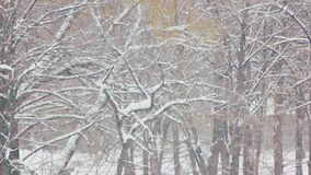 Winter snow magic landscape. Cozy winter nature scene with a falling snow. Trees covered with snow. Beautiful snowy weather stock footage