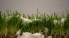 Winter snow melting, showing fresh green grass, spring coming, eco timelapse stock video