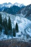 Winter snow mountain scene. Beautiful snow mountain scene with pines Royalty Free Stock Photos