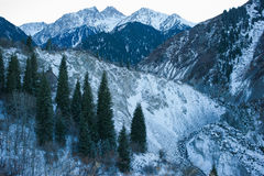 Winter snow mountain scene. Beautiful snow mountain scene with pines Stock Images