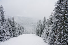 Winter snow mountains. Borovets, Bulgaria stock photography