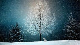 Winter, Snow, Nature, Tree Stock Photo