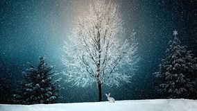 Winter, Snow, Nature, Tree Royalty Free Stock Photography