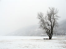 Winter Snow (Norway) Stock Image