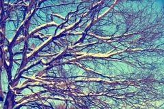 Winter snow oak tree Royalty Free Stock Photos