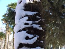 Winter, snow on palm tree Royalty Free Stock Photography