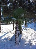 Winter, snow on palm tree Royalty Free Stock Images