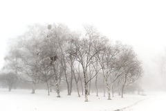 Winter snow park. Winter snow  park in the foggy day Royalty Free Stock Images