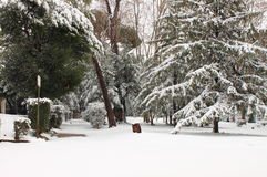Winter snow in park Royalty Free Stock Photos