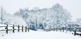 Winter snow path through forest