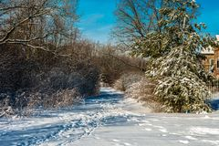 Winter snow path in the forest park stock photography