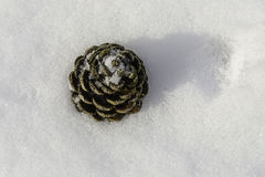 Winter Snow Pine Cone Royalty Free Stock Image