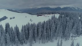 Winter snow pine forest drone flight in mountains stock video