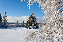 Winter snow pine tree stock photography