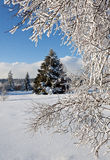 Winter snow pine tree royalty free stock images