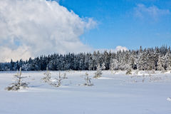 Winter snow pine trees, High Fens, Belgium stock image