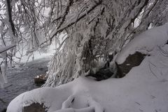 Winter, snow, river, trees royalty free stock photo