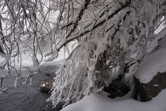 Winter, snow, river, trees stock photography