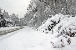 Winter snow and a road going through forest Royalty Free Stock Photo