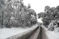Winter snow and a road going through forest Stock Photos