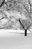 Winter Snow Scene. Winter scene following a heavy snow fall in St Albans, Hertfordshire, England. Natural light royalty free stock images