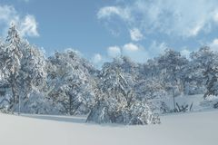 Winter Snow Scene Royalty Free Stock Photography