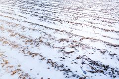 Winter snow scene on arable farm land Royalty Free Stock Images