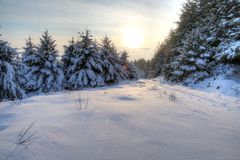 Winter Snow Scene HDR. Winter snow scene with pine trees and sky in HDR Stock Photo