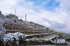 Winter Snow Scenery in Vineyard Royalty Free Stock Photo