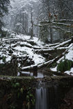 Winter snow scenic valley in the misty forest. Winter snow scenic valley with small stream and waterfall in the misty forest. An Old forest blanketed with royalty free stock images