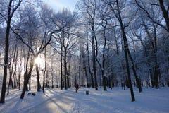 Winter, Snow, Sky, Tree stock photo