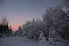 Winter, Snow, Sky, Tree stock image