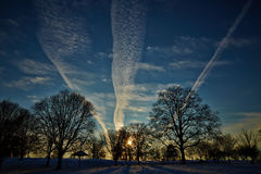 Winter. Snow, sky and tree  in winter Royalty Free Stock Photo