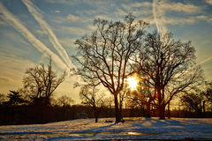 Winter. Snow, sky and tree  in winter Stock Photography