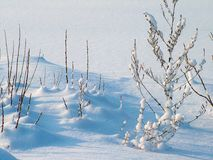 Winter, Snow, Sky, Tree royalty free stock photography
