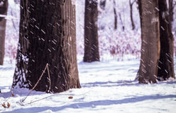 Winter snow storm in a forest Stock Images