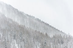 Winter snow storm sweeping across tree covered mountain royalty free stock photo