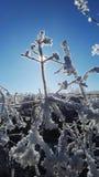 Winter. Snow sun Royalty Free Stock Photo