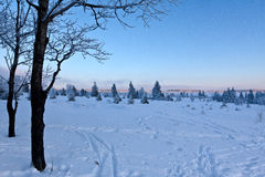 Winter snow sunset trees, High Fens, Hautes Fagnes, Belgium royalty free stock image