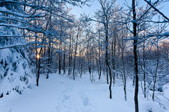 Winter snow sunset trees royalty free stock images