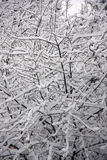 Winter snow on tree branches Stock Photos