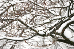Winter snow on tree branches. Winter time snow piling up on the trees and branches Stock Image
