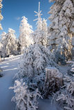 Winter snow tree Stock Image