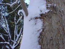 Winter, snow on tree Stock Photos
