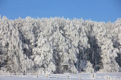 Winter, Snow, Tree, Frost Stock Images