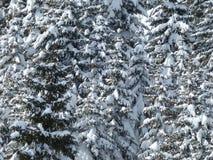 Winter, Snow, Tree, Frost Stock Image