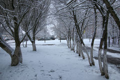 Winter snow on tree PARK Royalty Free Stock Images