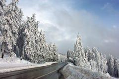 Winter, Snow, Tree, Sky royalty free stock image