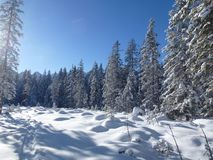 Winter, Snow, Tree, Sky stock images