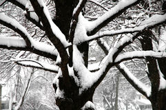 Winter snow on tree. Winter time snow piling up on the trees and branches Royalty Free Stock Photo